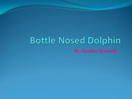 By: Sanika Marwah. Introduction Do you know about the Bottle Nosed Dolphin? If you don't why don't you just read this report. It won't take long at all.