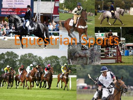 Equestrian Sports 1 2 3 4 5 6 7. What are the main disciplines? The most popular equestrian disciplines are: Dressage Show jumping Eventing Racing Showing.