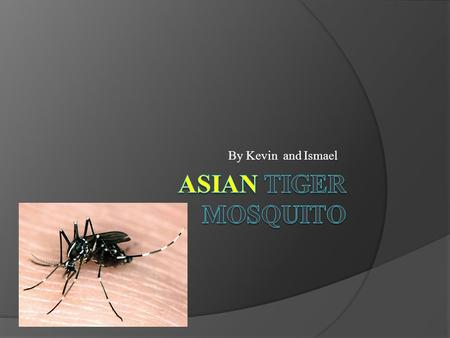 By Kevin and Ismael. Name of Species  Asian Tiger Mosquito  Scientific Name: Aedes Albopictus.
