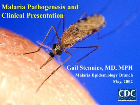 Malaria Pathogenesis and Clinical Presentation Gail Stennies, MD, MPH Malaria Epidemiology Branch May, 2002.