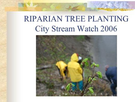 RIPARIAN TREE PLANTING City Stream Watch 2006. SAWMILL CREEK Phase II Rehabilitation Project.