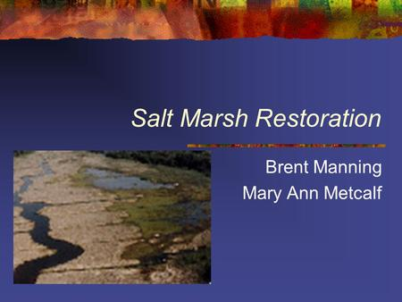 Salt Marsh Restoration Brent Manning Mary Ann Metcalf.