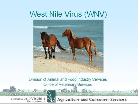 Causative Agent Virus Infects Humans, Birds, Mosquitoes, Horses and Other Mammals.