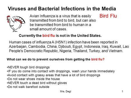 Avian influenza essay