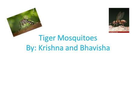 Tiger Mosquitoes By: Krishna and Bhavisha Name of species Scientific name- Aedes Albopictus Common name- Tiger mosquitoes Kingdom- Anamalia Phylum- Arthropod.