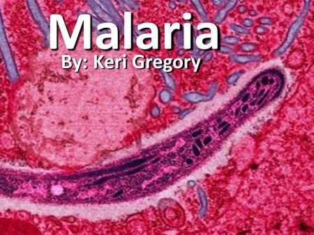 Malaria By: Keri Gregory. What is Malaria??? Malaria is an infectious disease that is cause by a protozoan parasite.