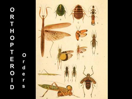ORTHOPTEROIDORTHOPTEROID Orders Orders Orthopteroid orders INSECT DIVERSITY: ORDERS 37% Species 5-8% Gullen & Cranston 2005 Fig. 7.2.
