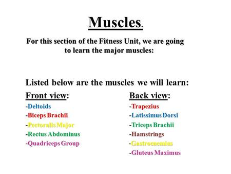 Muscles. For this section of the Fitness Unit, we are going to learn the major muscles: Listed below are the muscles we will learn: Front view: Back view: