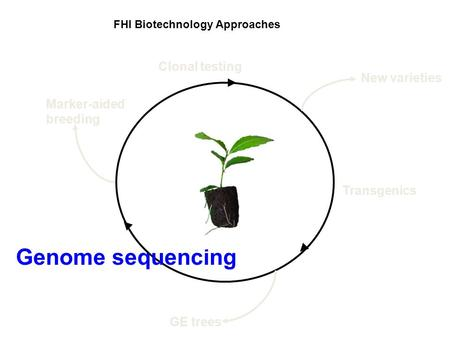 FHI Biotechnology Approaches Genome sequencing Clonal testing Transgenics GE trees New varieties Marker-aided breeding.