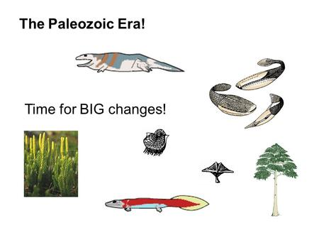 The Paleozoic Era! Time for BIG changes!. Geologists divided the later strata into 3 major groups Paleozoic Era Mesozoic Era Cenozoic Era Remember this?