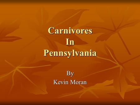Carnivores In Pennsylvania By Kevin Moran. Black Bears (Ursus americanus) Reach breeding maturity at around 3 to 4 years old Reach breeding maturity at.
