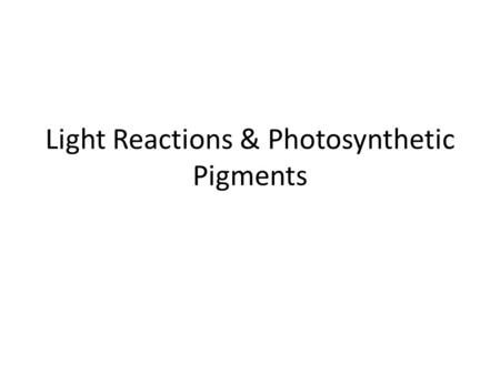 Light Reactions & Photosynthetic Pigments. LIGHT! Of all the light energy that reaches the earth's surface, ~5% is transferred to carbohydrates by a leaf.