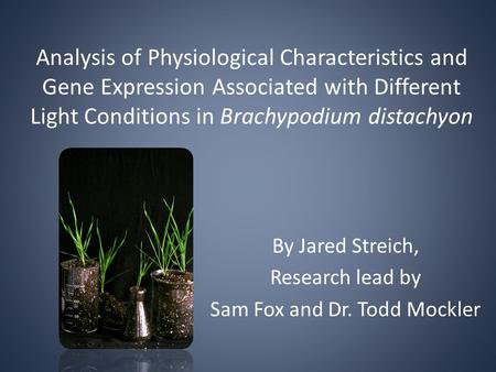 Analysis of Physiological Characteristics and Gene Expression Associated with Different Light Conditions in Brachypodium distachyon By Jared Streich, Research.