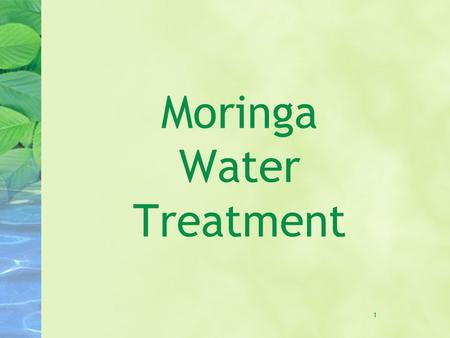 1 Moringa Water Treatment. 2 Food and oil M. oleifera is cultivated for its leaves, fruits, and roots for a variety of food and medicinal purposes An.