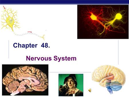 AP Biology 5/18/2015 Chapter 48. Nervous System. AP Biology 5/18/2015 Why do animals need a nervous system? Remember to think about the bunny…