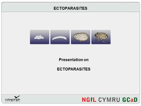 ECTOPARASITES Presentation on ECTOPARASITES. Introduction What is an ectoparasite? Why is the control of ectoparasites so important? Where should we seek.