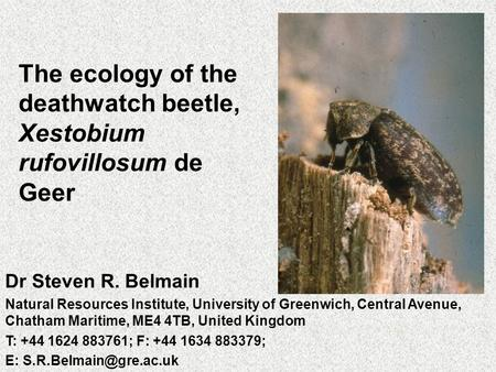 The ecology of the deathwatch beetle, Xestobium rufovillosum de Geer Dr Steven R. Belmain Natural Resources Institute, University of Greenwich, Central.