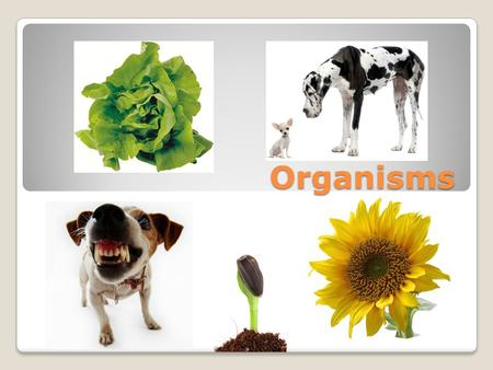 Organisms. An organism is a living thing. How are trees, dogs, mushrooms, and worms the same? Each is an organism.