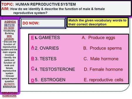 1. GAMETES A. Produce eggs 2. OVARIES B. Produce sperms 3. TESTES C. Male hormone 4. TESTOSTERONE D. Female hormone 5. ESTROGEN E. reproductive cells.