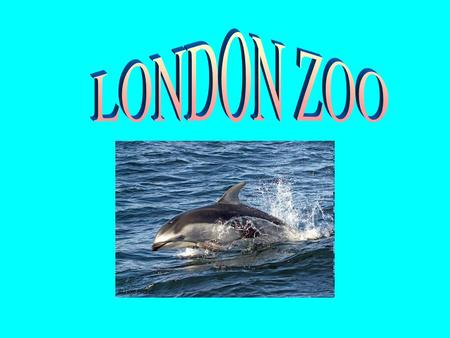 SOME FACTS ABOUT LONDON ZOO In the heart of London, on the north side of Regent's Park, is London Zoo. When the Zoo opened in 1828 it housed a collection.