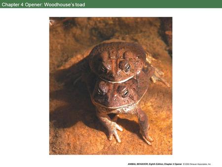 Chapter 4 Opener: Woodhouse's toad. 4.1 A complex response to simple stimuli.