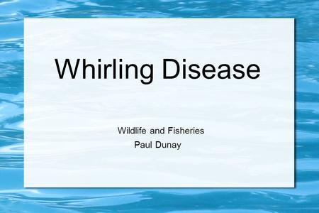 Whirling Disease Wildlife and Fisheries Paul Dunay.