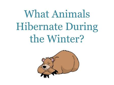 What Animals Hibernate During the Winter?