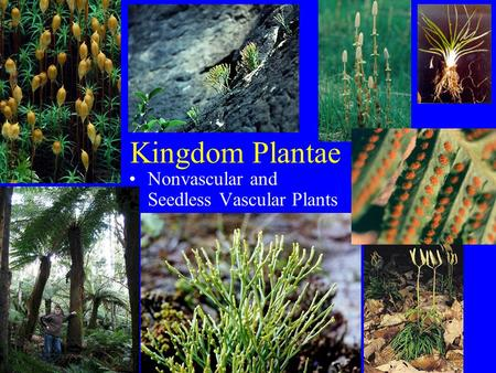 Kingdom Plantae Nonvascular and Seedless Vascular Plants.