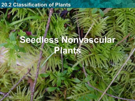20.2 Classification of Plants Seedless Nonvascular Plants.