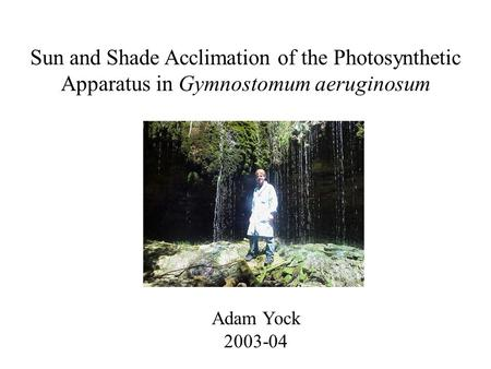 Sun and Shade Acclimation of the Photosynthetic Apparatus in Gymnostomum aeruginosum Adam Yock 2003-04.