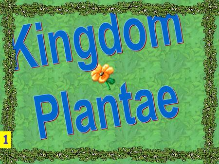 Kingdom Plantae 1.