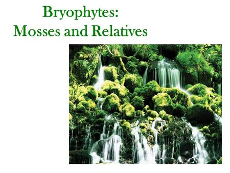 Bryophytes: Mosses and Relatives