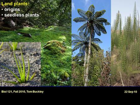 Land plants: origins seedless plants Biol 121, Fall 2010, Tom Buckley 22 Sep 10.