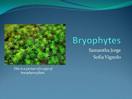 Samantha Jorge Sofia Vignolo This is a picture of a type of bryophytes plant.