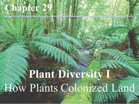 Plant Diversity I How Plants Colonized Land Chapter 29.