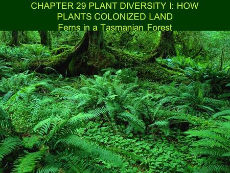 CHAPTER 29 PLANT DIVERSITY I: HOW PLANTS COLONIZED LAND Ferns in a Tasmanian Forest.