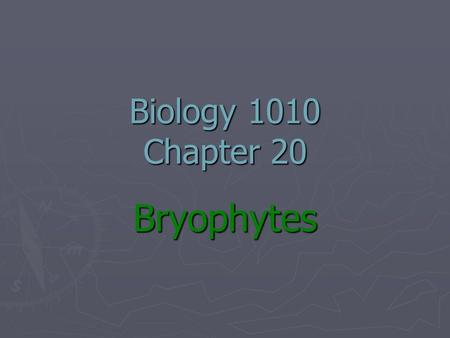 Biology 1010 Chapter 20 Bryophytes. Bryophytes ► What are they?? ► Where are they found?? ► What is their evolutionary & ecological importance??