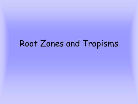 Root Zones and Tropisms. Root functions Anchors the plant Absorbs water and minerals Sends water and minerals to the xylem.