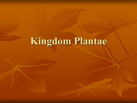 Kingdom Plantae. Chapter 22: Introduction to Plants Why are plants important? Why are plants important? Kingdom Kingdom Archaebacteria Archaebacteria.