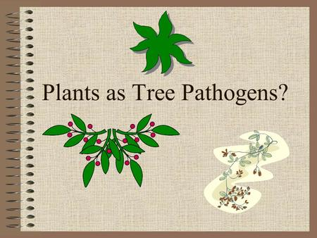 "Plants as Tree Pathogens?. Types of ""Pathogenic"" Plants Parasitic Plants (aerial) –mistletoes, dodder, woe vine Root Parasites –black senna, squaw root,"