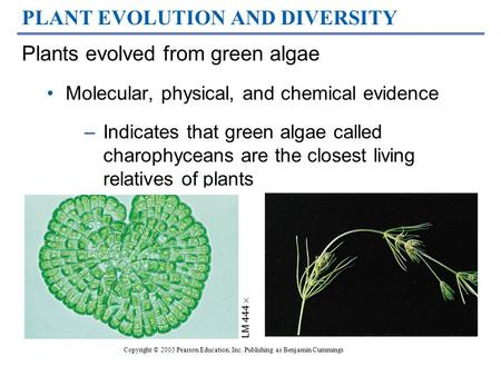 PLANT EVOLUTION AND DIVERSITY Plants evolved from green algae Molecular, physical, and chemical evidence –Indicates that green algae called charophyceans.