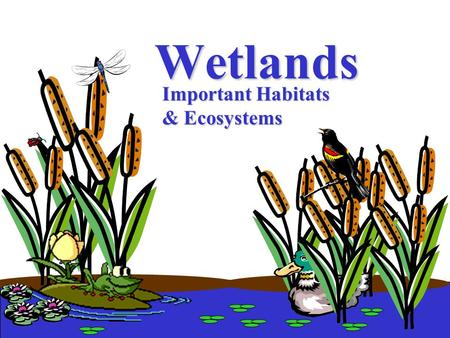 "Wetlands Important Habitats & Ecosystems What are ""wetlands""?"
