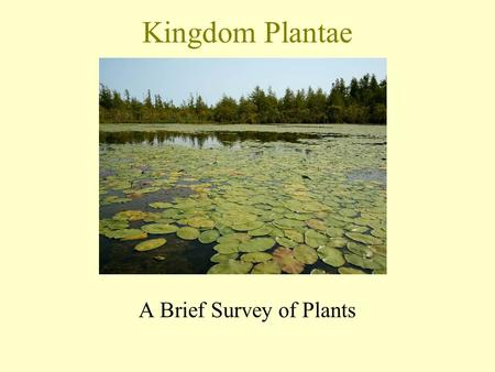 Kingdom Plantae A Brief Survey of Plants. The study of plants is called botany. Plants are believed to have evolved from green algae. The main plant (land)