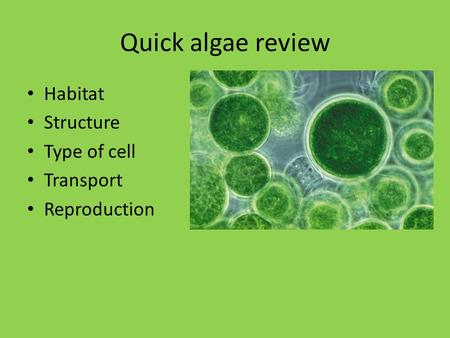Quick algae review Habitat Structure Type of cell Transport