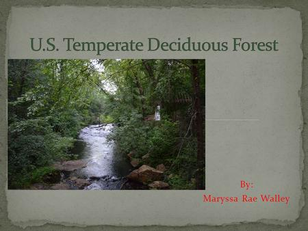 U.S. Temperate Deciduous Forest