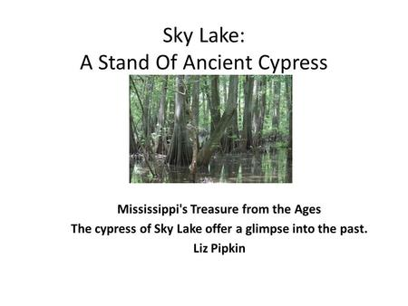Sky Lake: A Stand Of Ancient Cypress Mississippi's Treasure from the Ages The cypress of Sky Lake offer a glimpse into the past. Liz Pipkin.