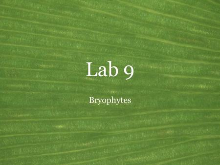 Lab 9 Bryophytes. Land Plants General features of the green plants Common name: Land plants Synonyms: Embryophytes, Kingdom Plantae Habitat: Terrestrial,