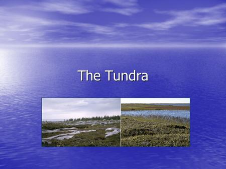 The Tundra. Tundra is the coldest of all the biomes. Tundra comes from the Finnish word tunturi, meaning treeless plain. Characteristics of tundra include: