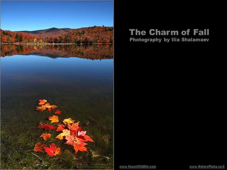 The Charm of Fall Photography by Ilia Shalamaev www.NaturePhoto.co.ilwww.FocusWildlife.com.