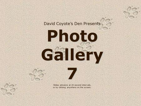 David Coyote's Den Presents Photo Gallery 7 Slides advance at 20 second intervals, or by clicking anywhere on the screen.